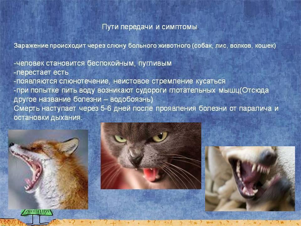 Чем можно заразиться от кошки человеку: список заболеваний
