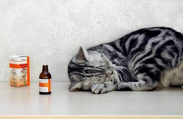 Можно ли давать коту валерьянку, каковы последствия?