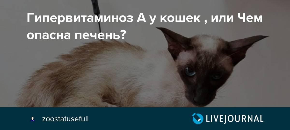 Идиопатический вестибулярный синдром кошек