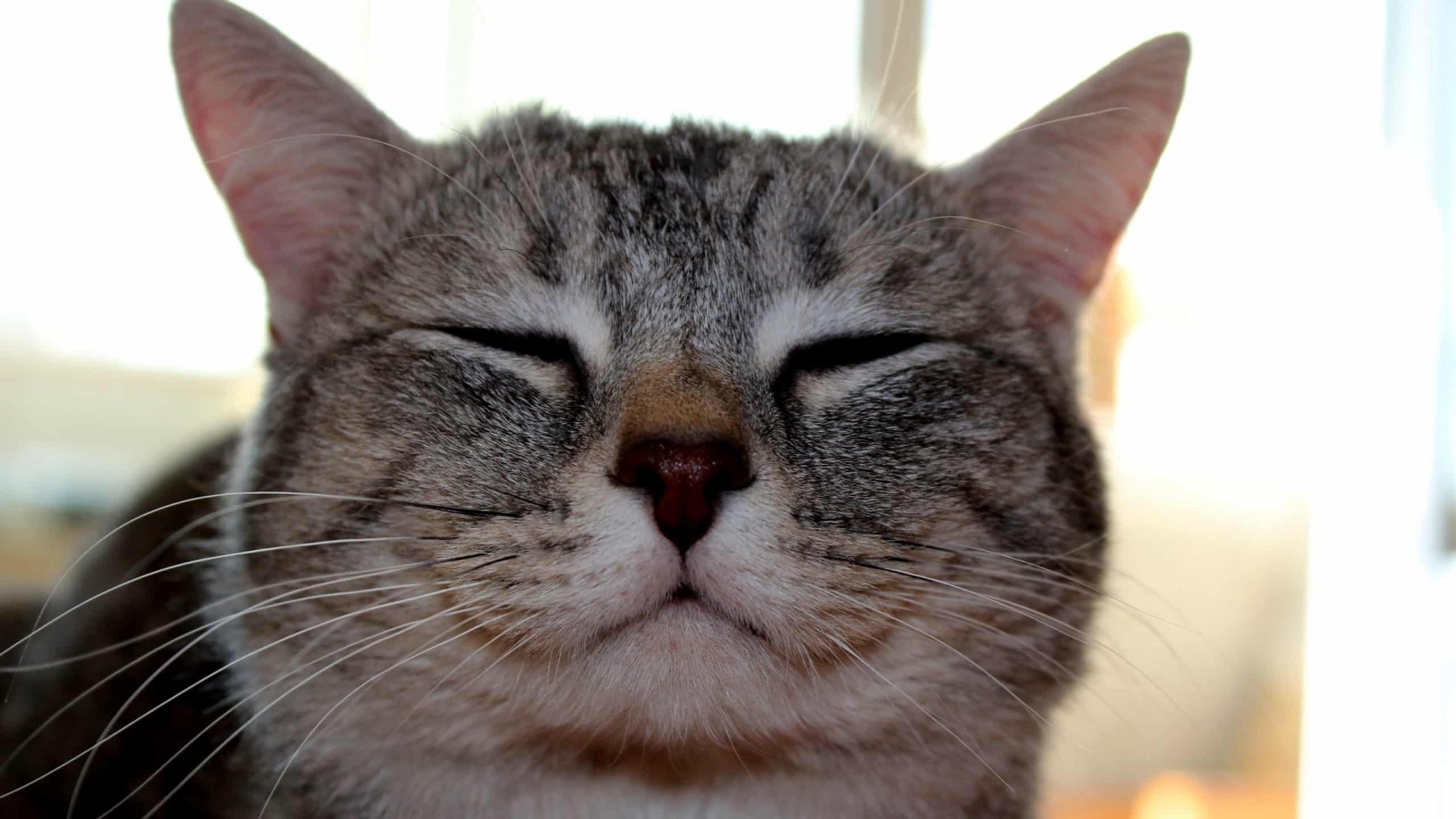 5 причин почему кошка щурит один глаз