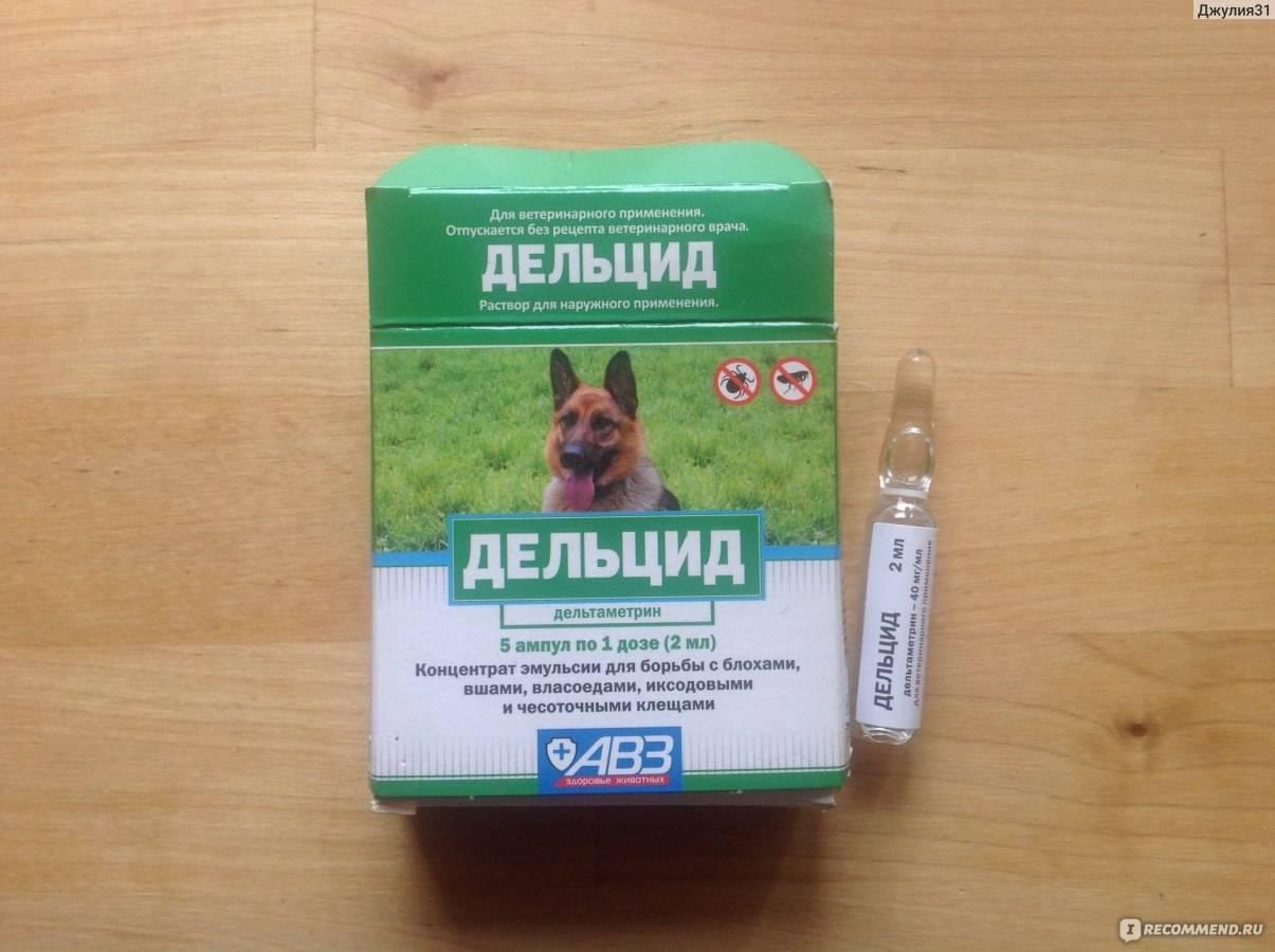 Лечение после укуса кота - муркин дом