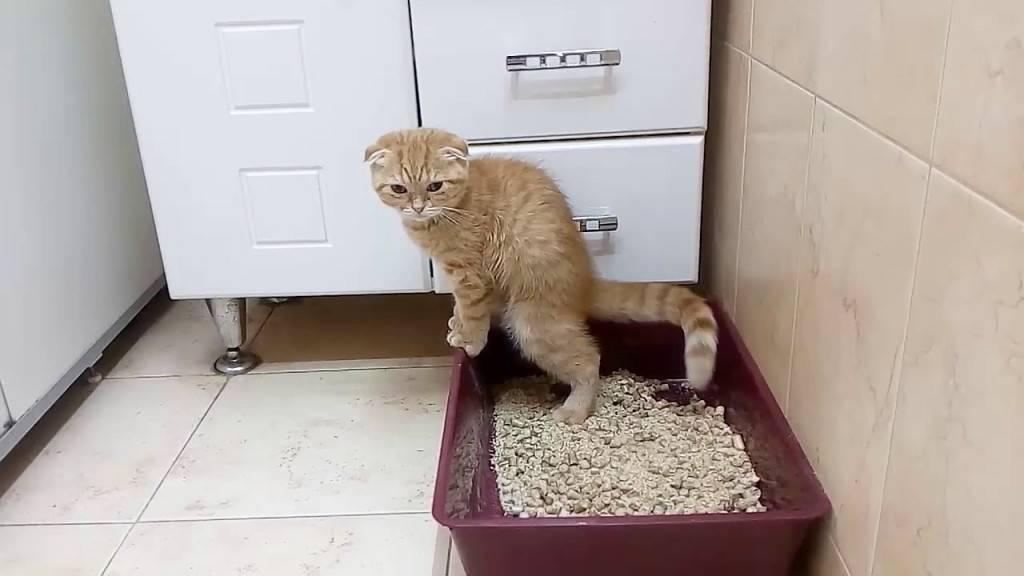 Кошка не может сходить в туалет по большому, что делать?