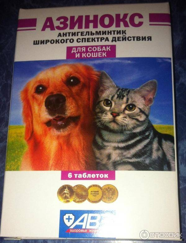 Таблетки от глистов для кошек: эффективные средства, плюсы и минусы