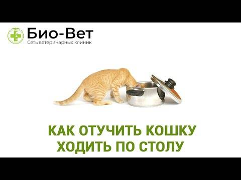 Как отучить кота лазить по столам, ходить по ним и прыгать за едой: советы специалистов