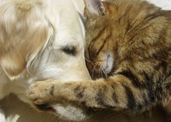 Назначено усыпление животного. владельцу присутствовать или нет. | усыпление животных