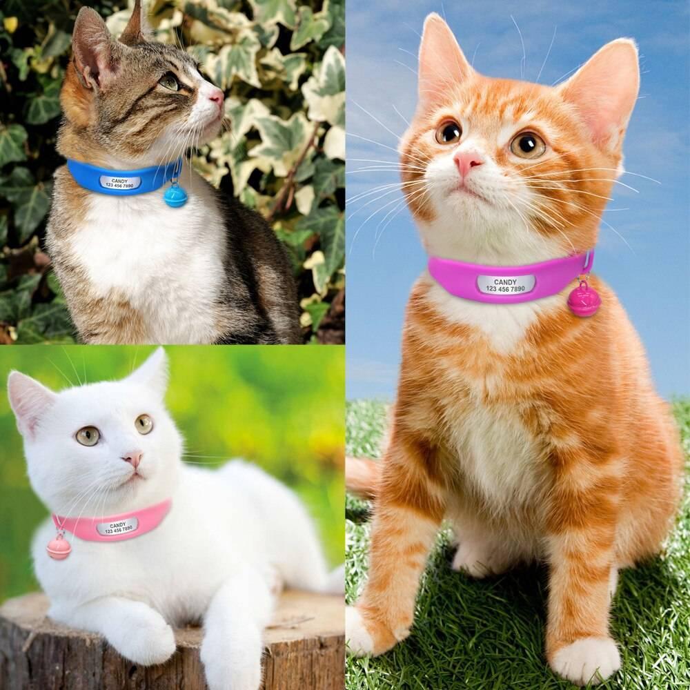 Ошейники для кошек от блох и клещей: эффективность, плюсы и минусы, модели ошейников от блох для котят и беременных, кормящих кошек