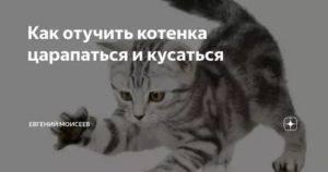 Как отучить кошку кусаться и царапаться | руки и ноги, когда гладишь