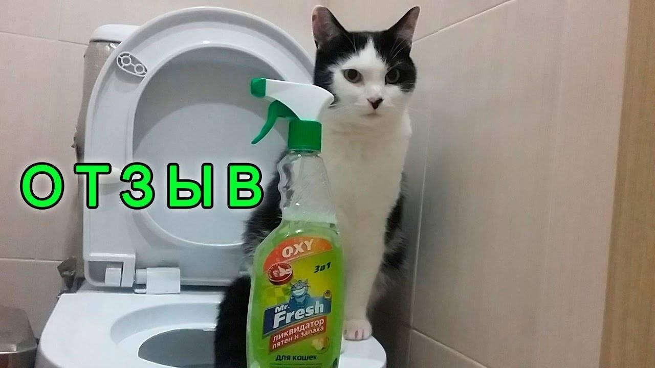 Как отучить кота гадить в неположенном месте навсегда как отучить кота гадить в неположенном месте навсегда