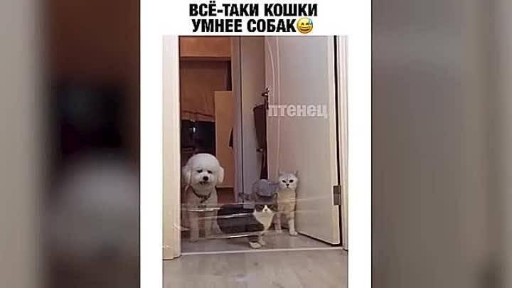 Кто умнее кошки или собаки - сравнение ума - kotiko.ru