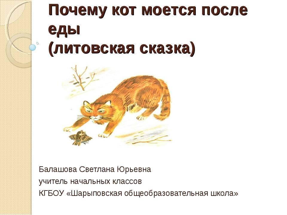 Познавательный рассказ в средней группе «почему кошка так часто умывается»