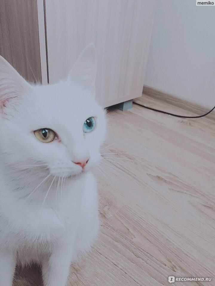 Как общаться с глухой кошкой