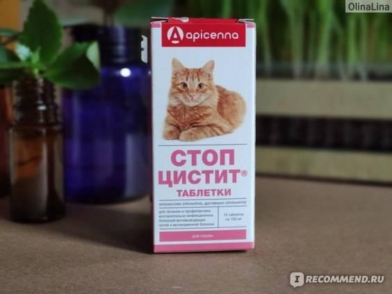 ᐉ стоп цистит для кошек что лучше таблетки или суспензия что лучше - zmclinic.ru