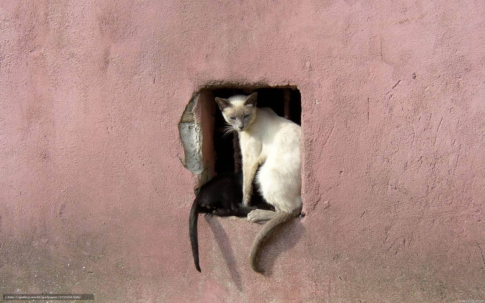 Что значит мяуканье кошки