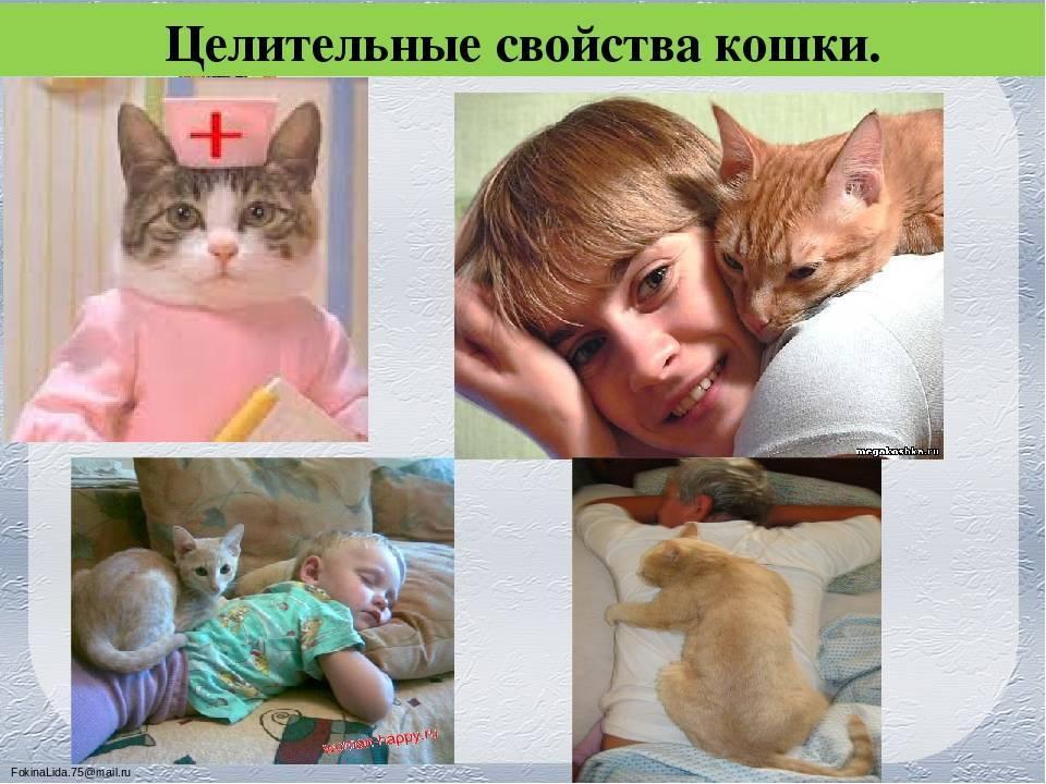 Какие кошки лечат людей: как влияют цвета, породы