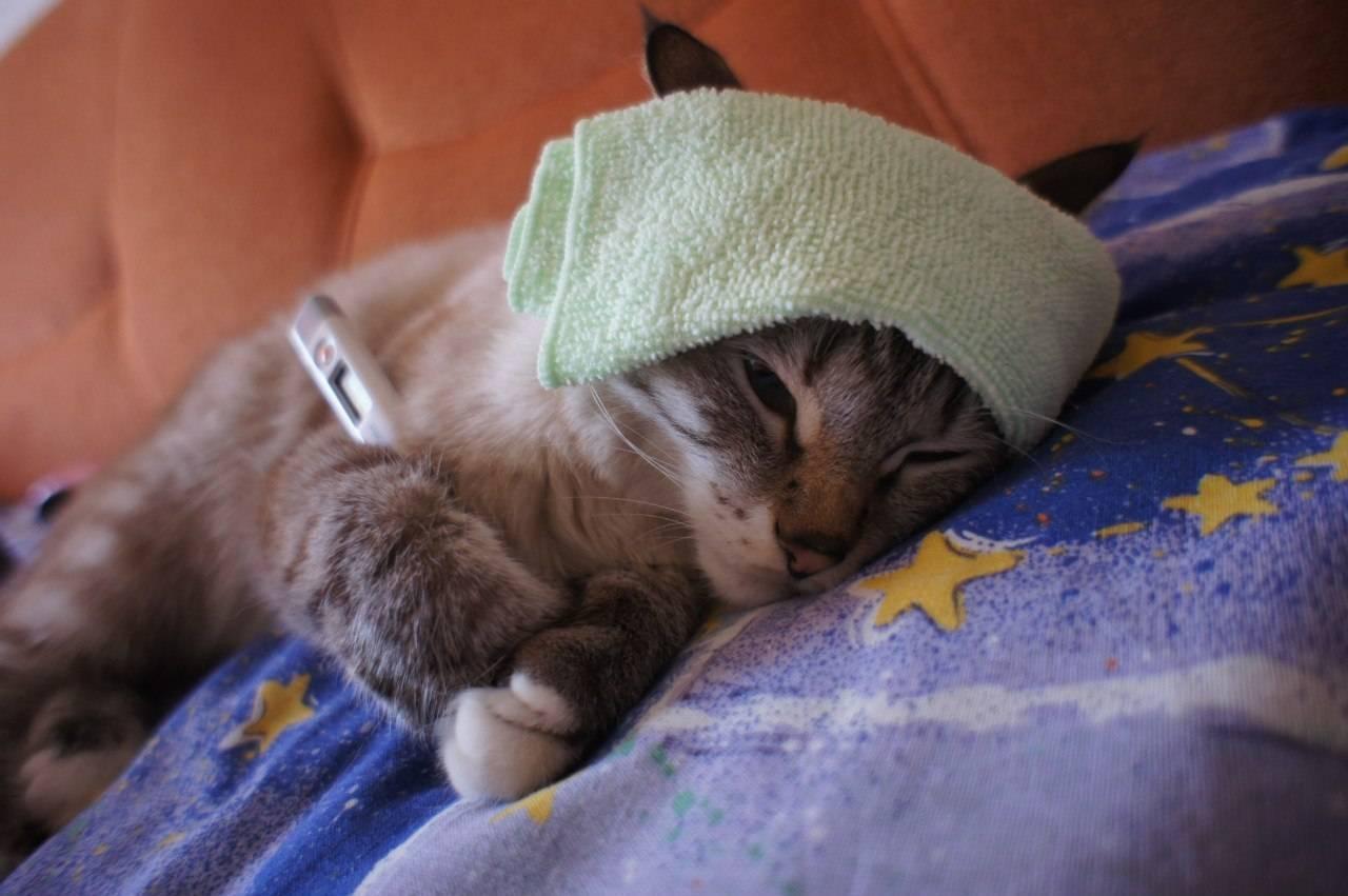 Котёнок тяжело дышит: причины, что делать. особенности дыхания котят, почему котёнок вдруг начал тяжело и с трудом дышать – первая помощь питомцу