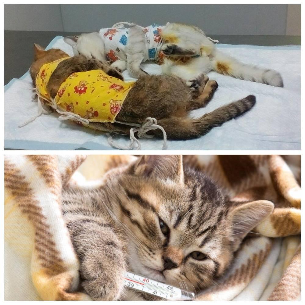 Вирусная лейкемия кошек