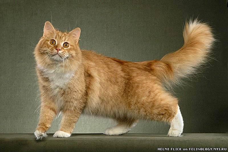 Фелинотерапия — лечение с помощью кошек