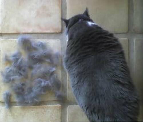 Что делать, если кошка сильно линяет: причины линьки, способы лечения и рекомендации ветеринаров