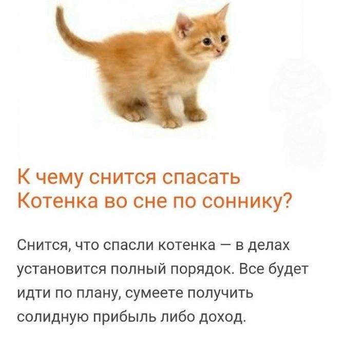 К чему снится кот. видеть во сне кот - сонник дома солнца