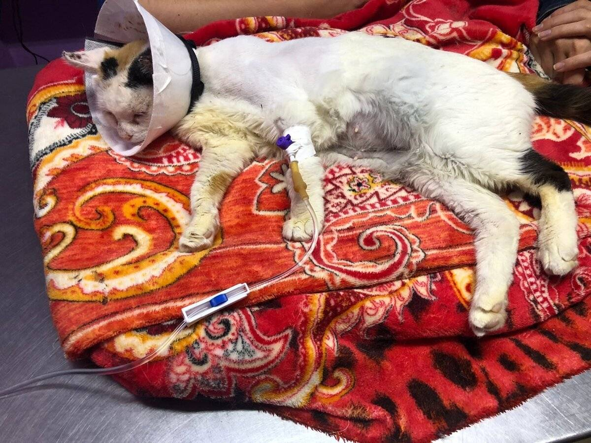 Как понять, что кошка умирает: признаки смерти от старости или болезни