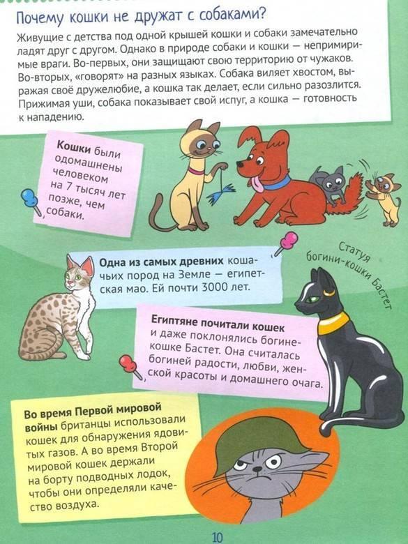 Почему собаки не любят кошек? причины, фото и видео