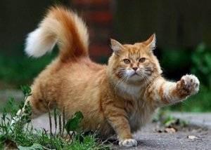 Плохой аппетит у кошек