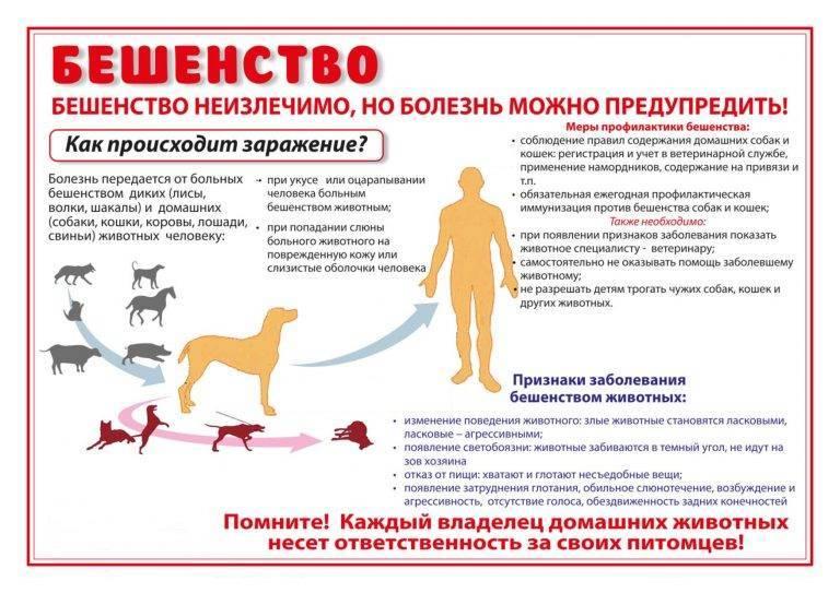Вакцины против бешенства у собак: виды и преимущества