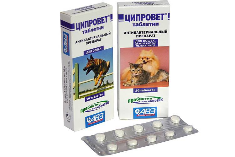 Инструкция по применению глазных капель и таблеток «ципровет» для лечения кошек, ципрофлоксацин в ветеринарии
