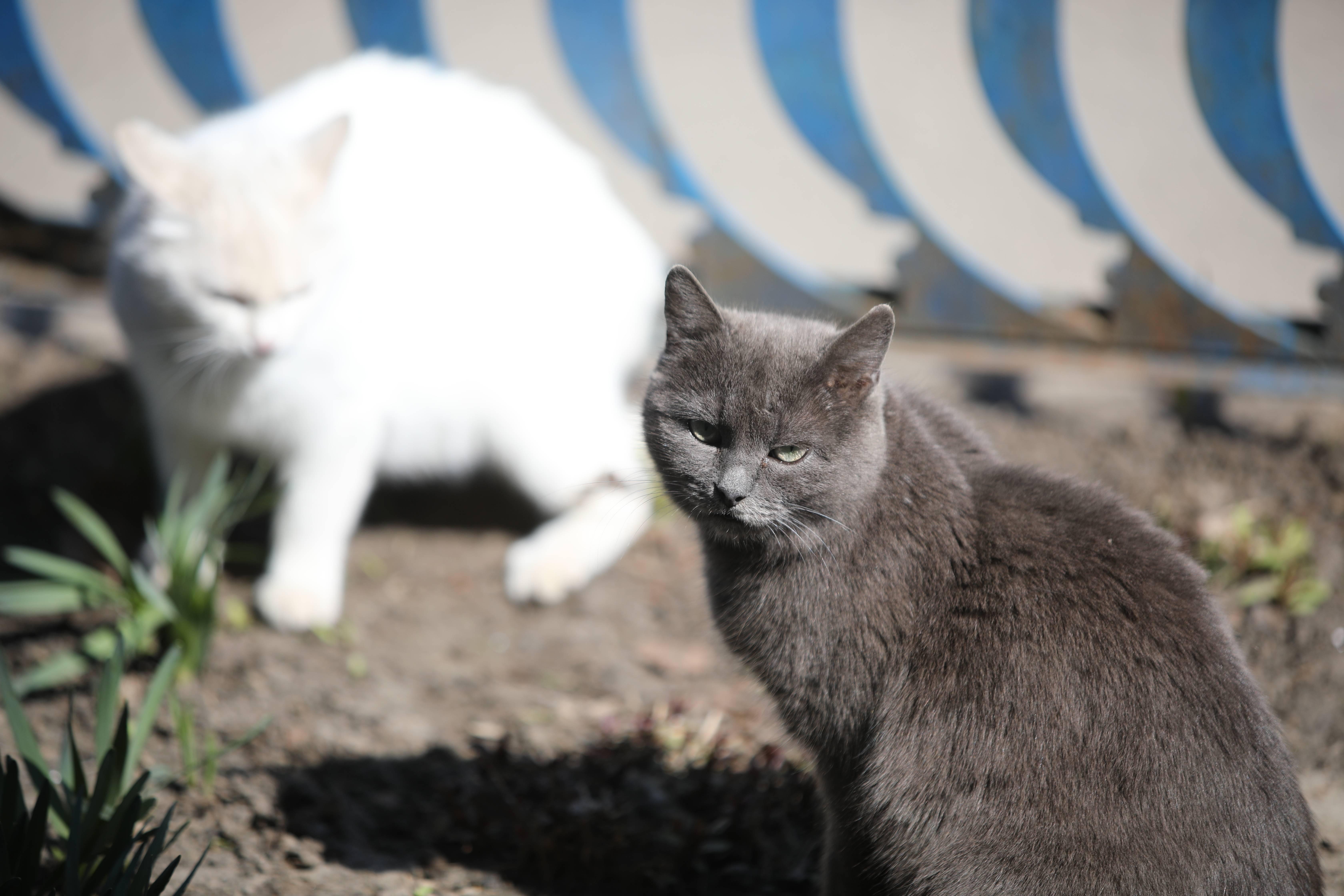 Простые способы успокоить кошку у ветеринара, которые советуют сами врачи