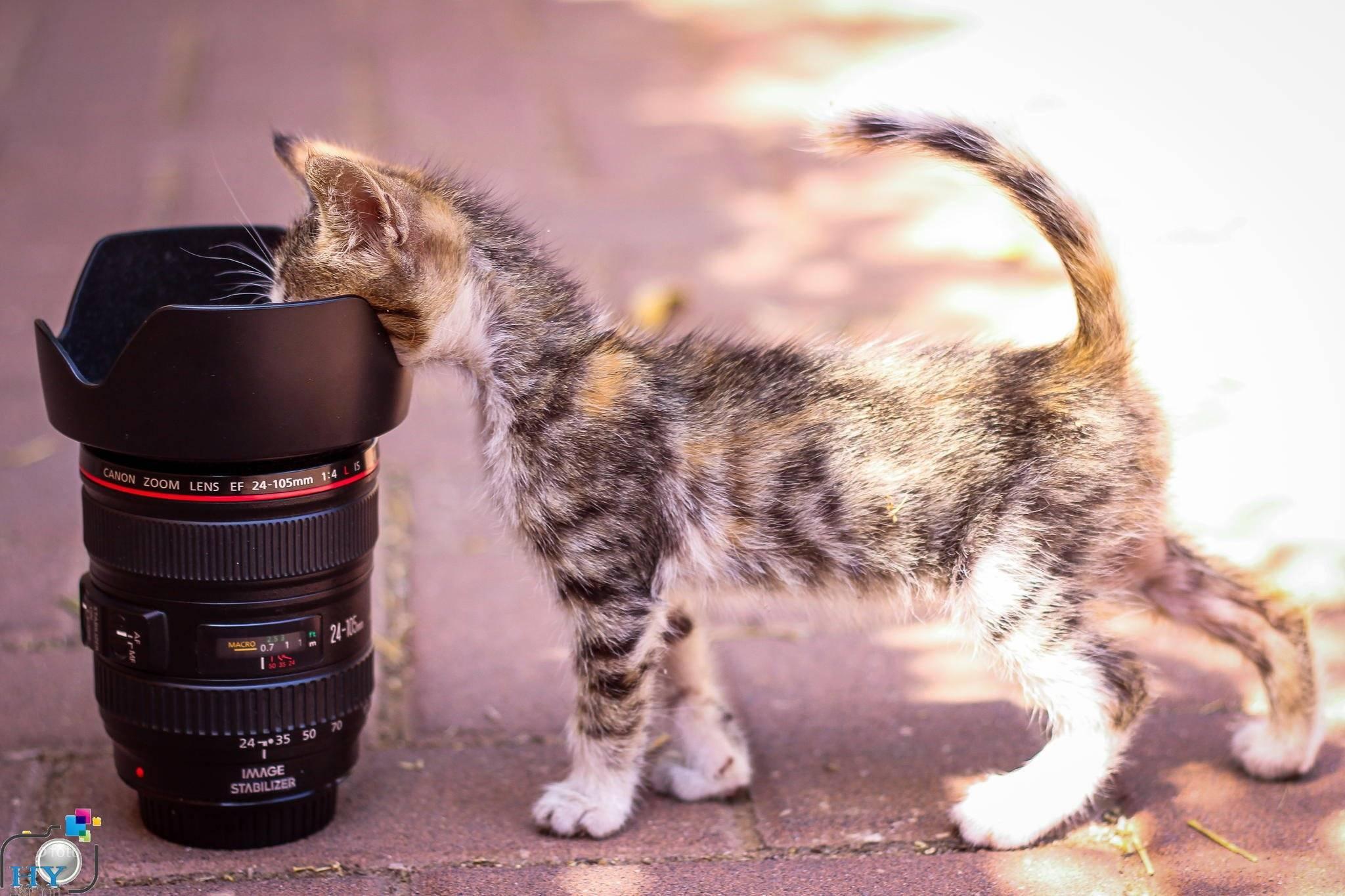 Чувствуют ли кошки любовь хозяина, хозяйки