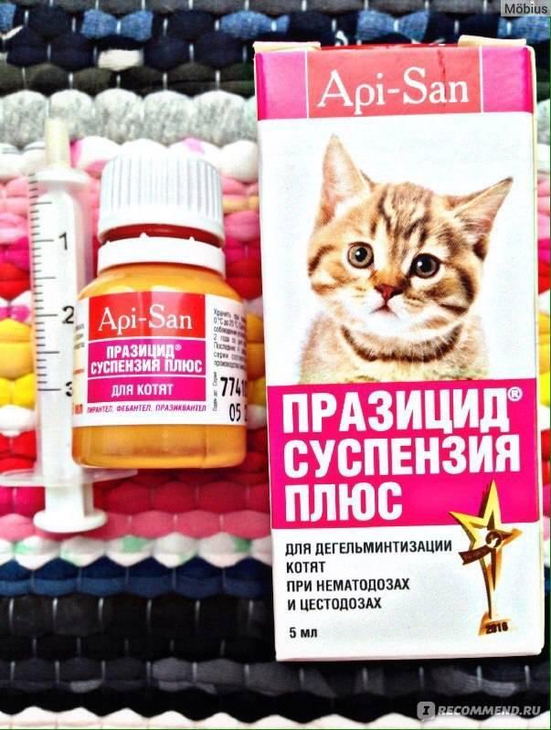 """Таблетки """"празицид"""" для кошек: инструкция по применению, дозировка и отзывы"""