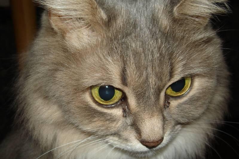 Могут ли кошки плакать от обиды или боли?