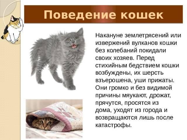 Затяжные роды у кошки: причины, симптомы