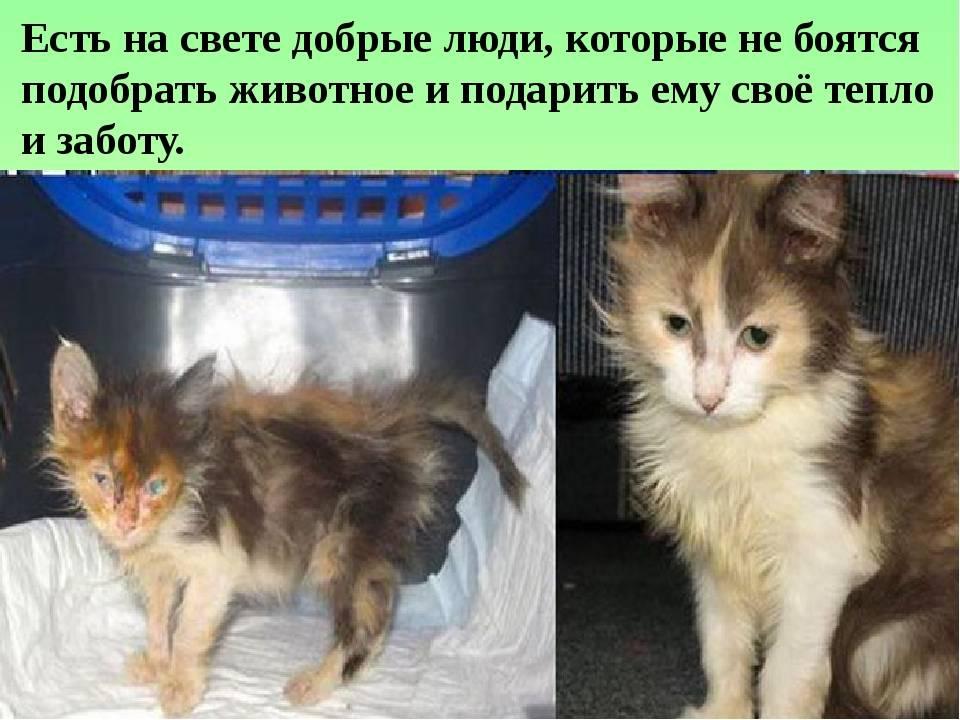 Подобрали котенка с улицы: что делать?