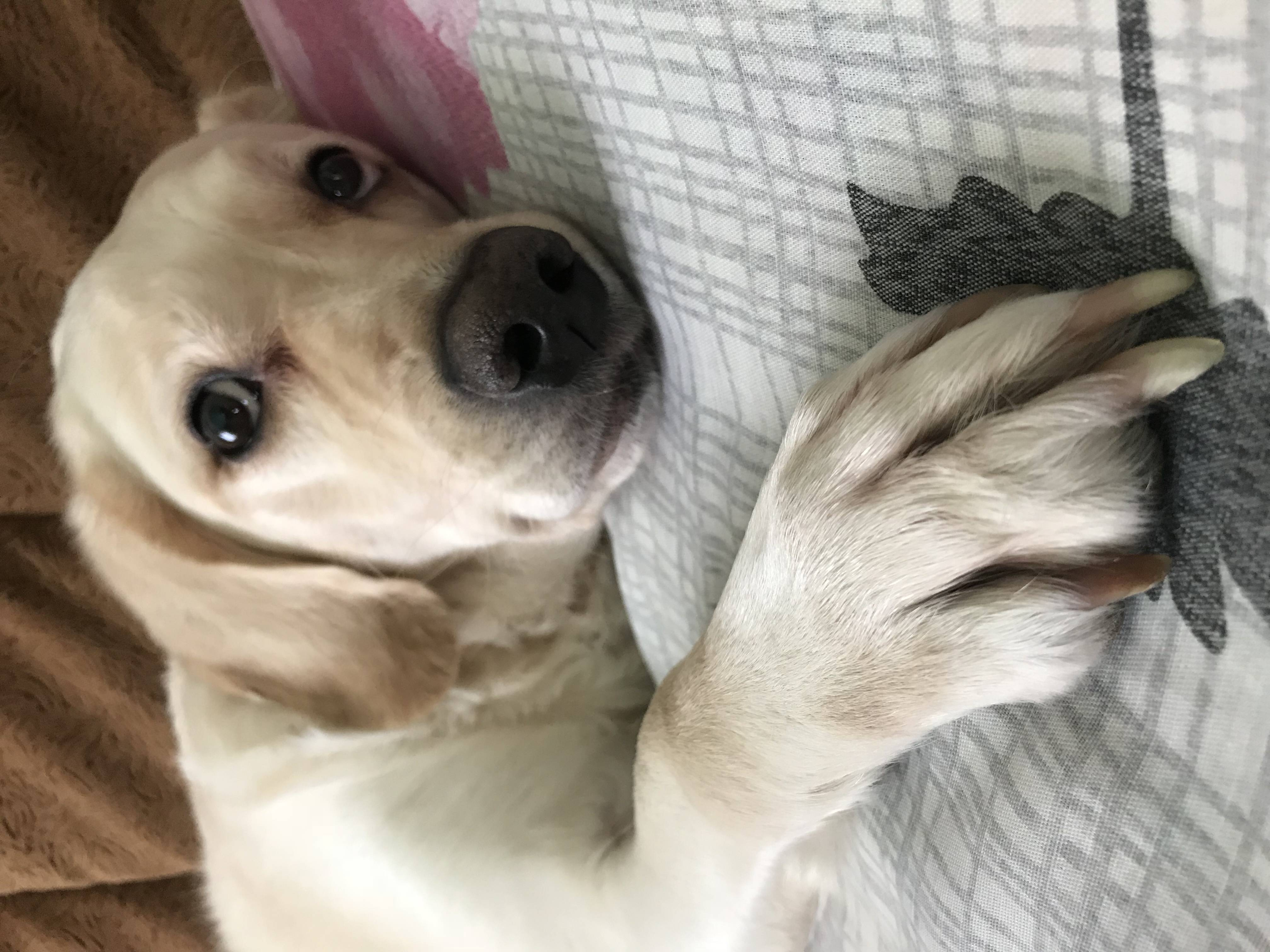 Без клиники и лицензии: чем опасен вызов ветеринара на дом? почему опасно вызывать ветеринаров на дом