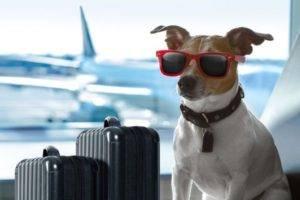 Правила ввоза животных в россию: оформление разрешения и другие документы