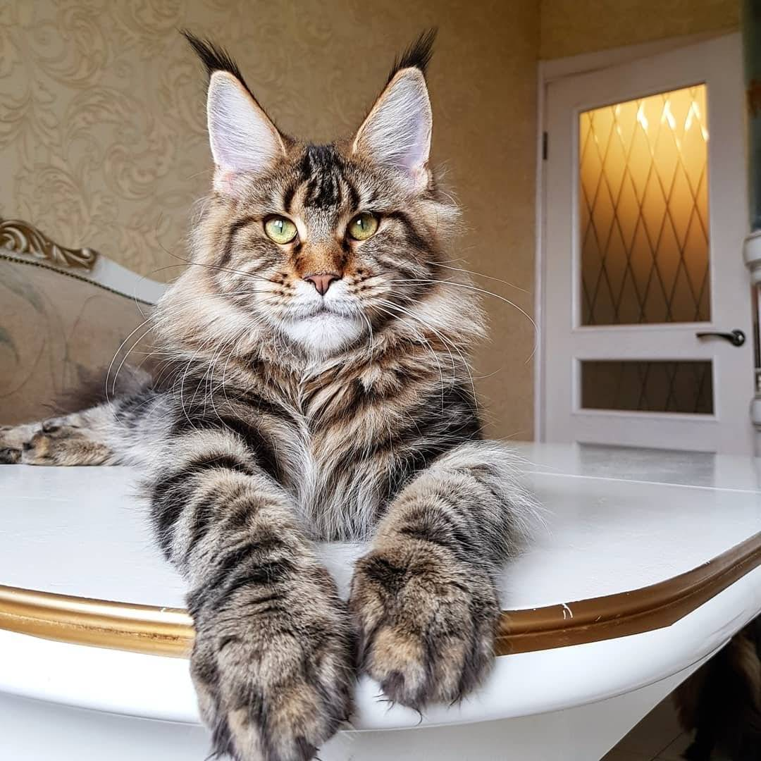 Самые добрые породы кошек — описание и фото