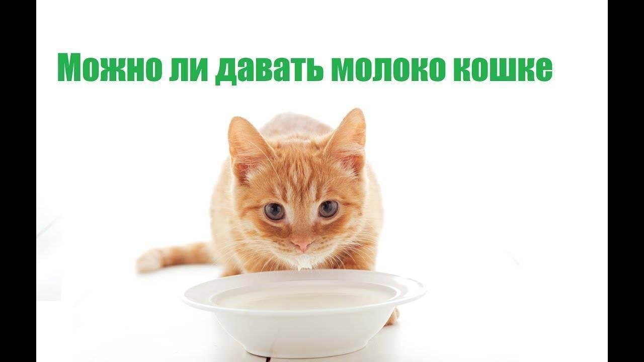 Можно ли кошкам давать сырые яйца? можно ли котам давать яйца (сырые и вареные)? можно ли кормить кошку вареным яйцом - новая медицина