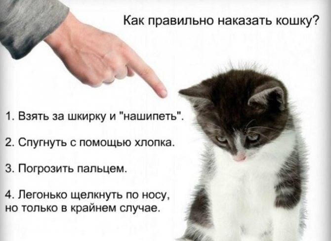 Кот не может пописать