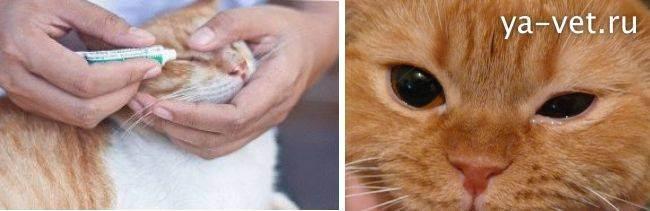 Можно ли и как промыть нос кошке физраствором