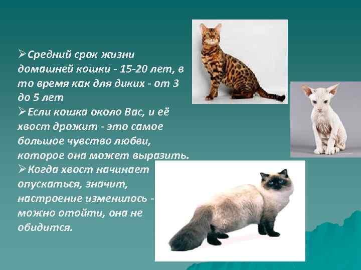 Продолжительность жизни кошек и котов | средняя, составляет лет, таблица