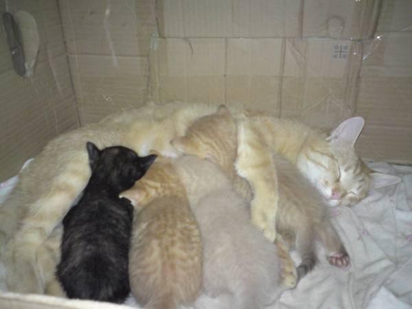 Когда можно забирать котенка от кошки когда можно забирать котенка от кошки