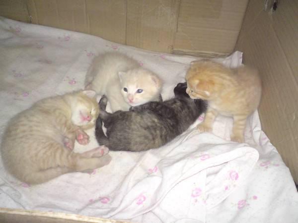 Когда можно забирать котенка от кошки, в каком возрасте это наиболее правильно