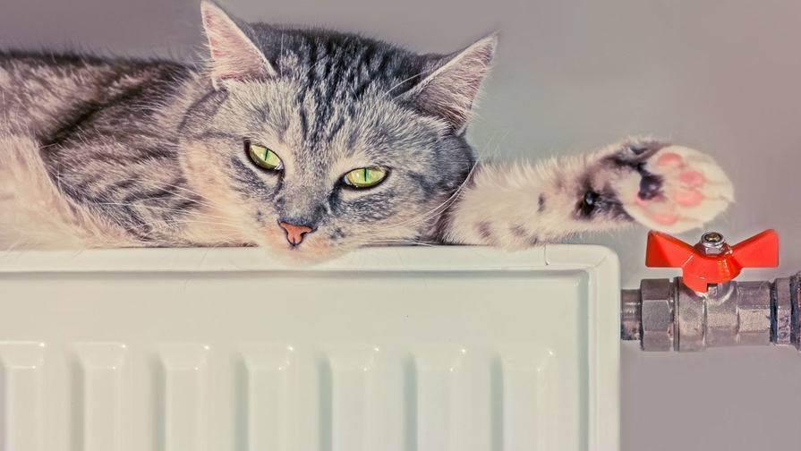Первый поход к ветеринару. 6 советов владельцу кошки