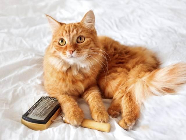 Кошку рвет шерстью что делать
