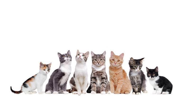 Люди в мире кошек, или кто мы для наших кошек