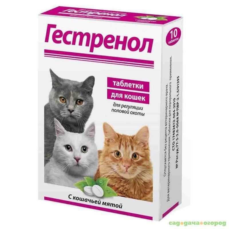 Гестренол - капли для кошек и котов: основные свойства и отзывы ветеринаров