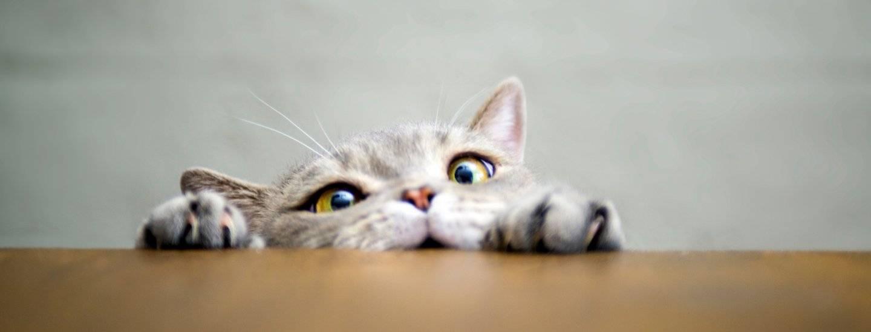 Как убрать запах мочи кошек и собак. эффективная уборка в доме с животными