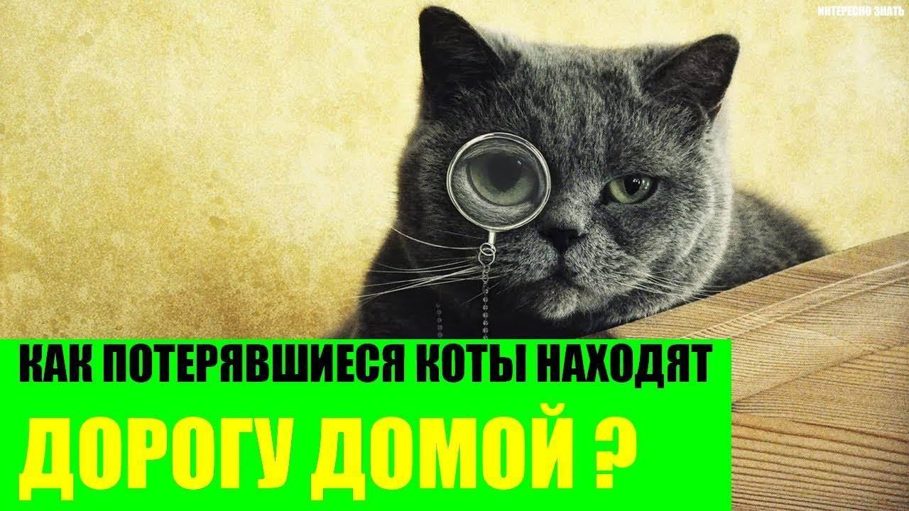 Все кошки возвращаются домой / читать онлайн