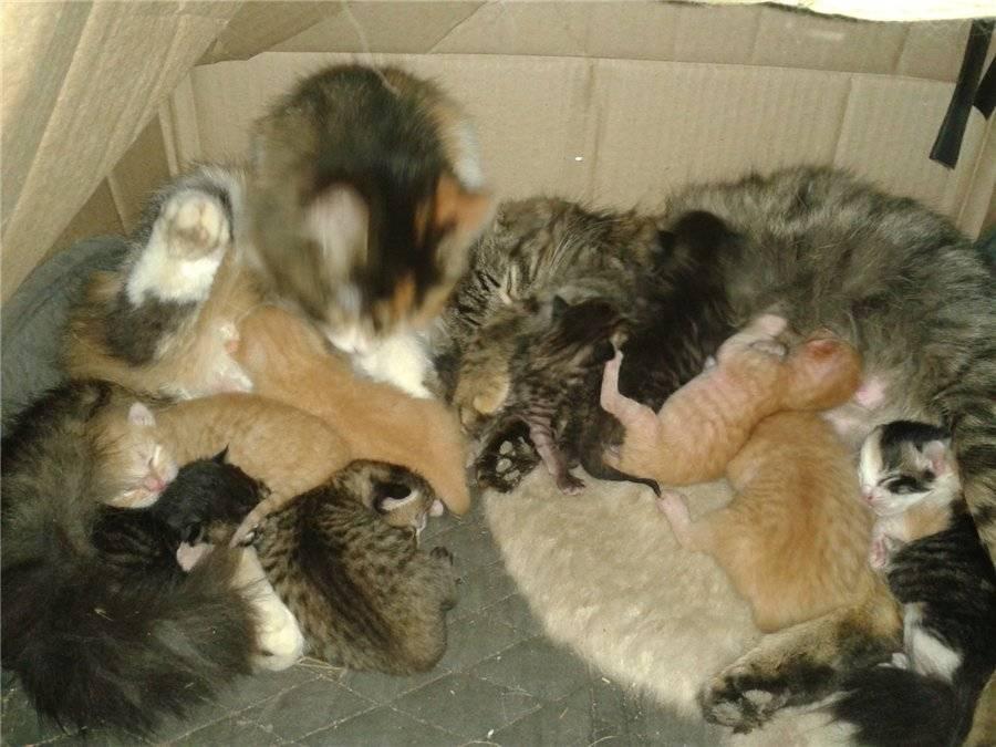 Что нужно знать про развитие котенка?